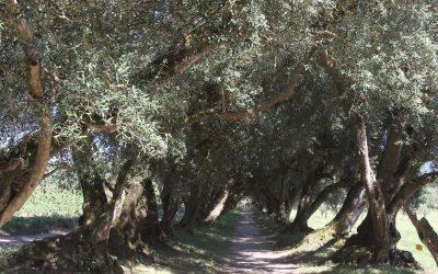 Galardón para Santa Cruz de Ribadulla por su mítico jardín