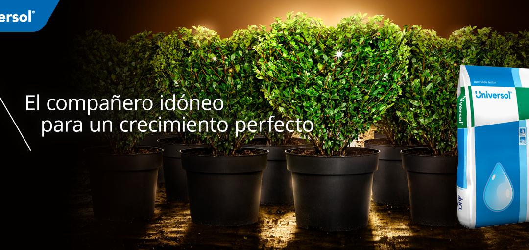 Universol, el compañero idóneo para un crecimiento perfecto de las plantas ornamentales