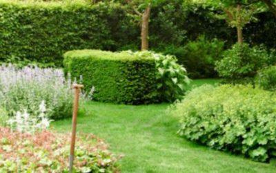 """Webinar """"Fertilización desde el vivero, implantación del jardín y su mantenimiento"""""""