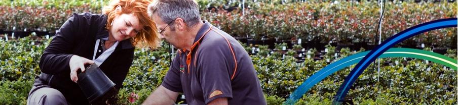 ICL presenta Osmocote Pro Low P, una gama para plantas sensibles o con bajas necesidades de fósforo